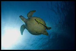 17-40 mm, Canon EOS 5D, Marsa Alam 2008 by Dejan Sarman 